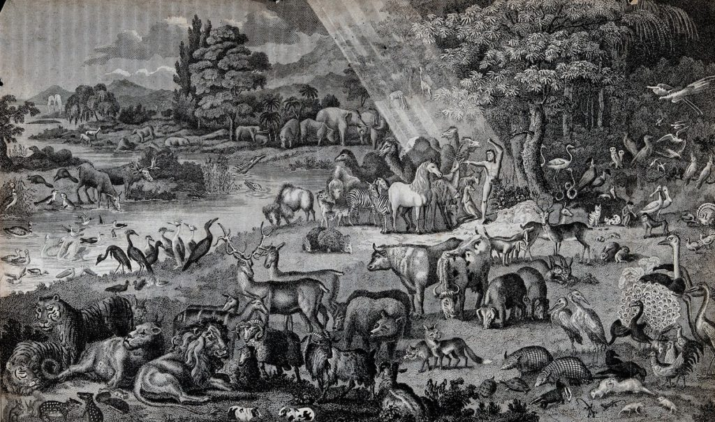 Adam naming the animals in the garden of eden